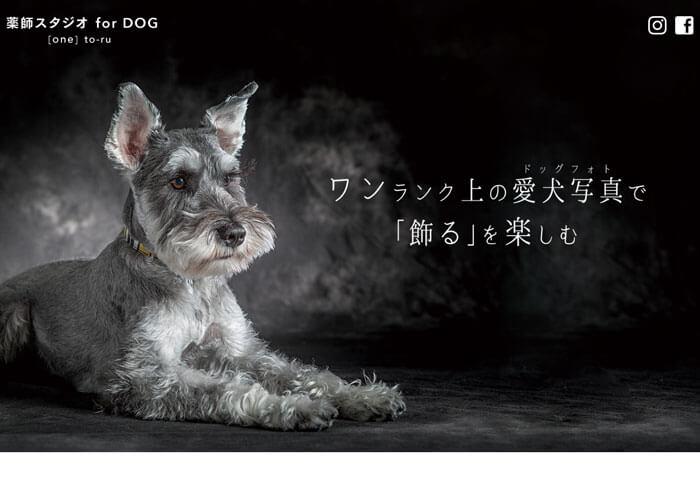 薬師スタジオ for DOGのキャプチャ画像