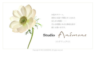 studio Anemone